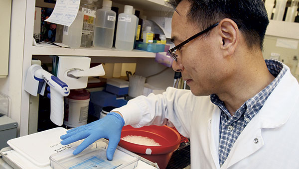 Researcher Young-soo Han works to identify proteins in rat cardiac cells in a lab at Mayo Clinic in Rochester on Sept. 19.